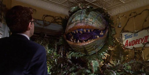 This-is-Audrey-II-little-shop-of-horrors-37597217-821-417