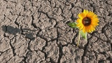 Resilience: Coping Skills, Post Traumatic Growth,and